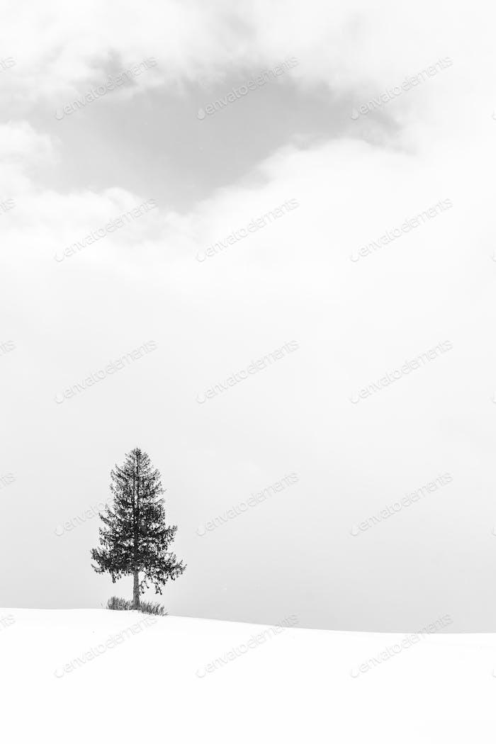 Красивый пейзаж с одиноким деревом в снежный зимний сезон