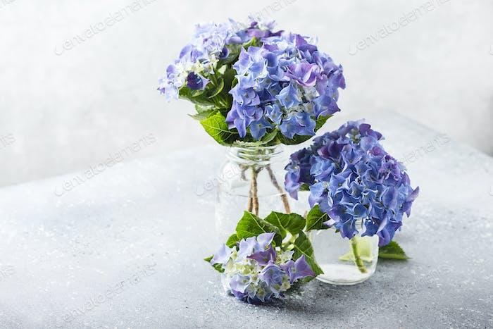 Amazing blue hydrangea flowers