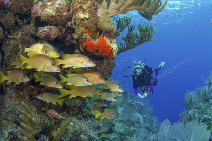 Scuba diver viewing school of snapper on a coral reef.