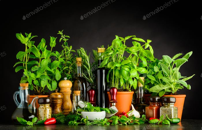 Still Life wit Cooking Ingredients, Herbs and Utensils