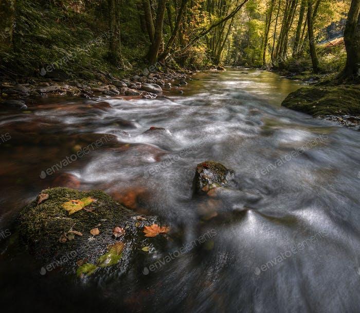 Gefallene Blätter an der auf einem Felsen in der Mitte eines Flusses
