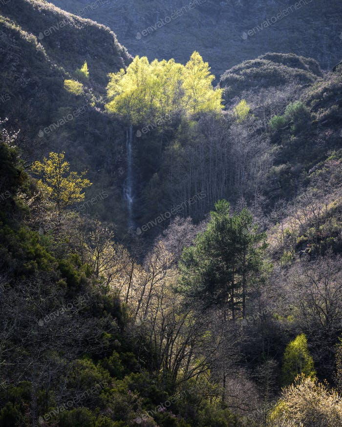 Birch Forest on top of a Cliff with a Waterfall