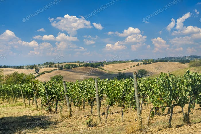 Summer landscape in the Chianti region (Tuscany)