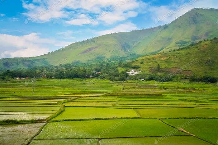 Terraced ricefields in the tropics of Sumatra, Indonesia