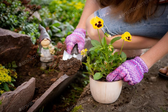 Woman's hands planting yellow flowers in the garden