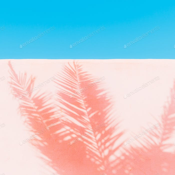 Palm. Shadow on the wall. Minimal art. Tropical fashion mood