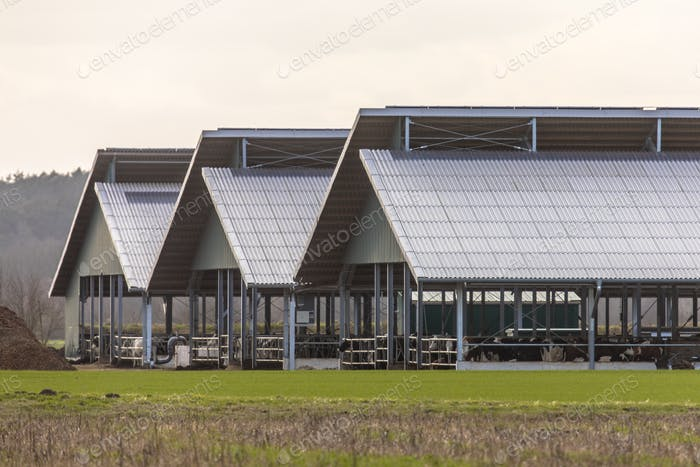 Three giant barns at factory farm