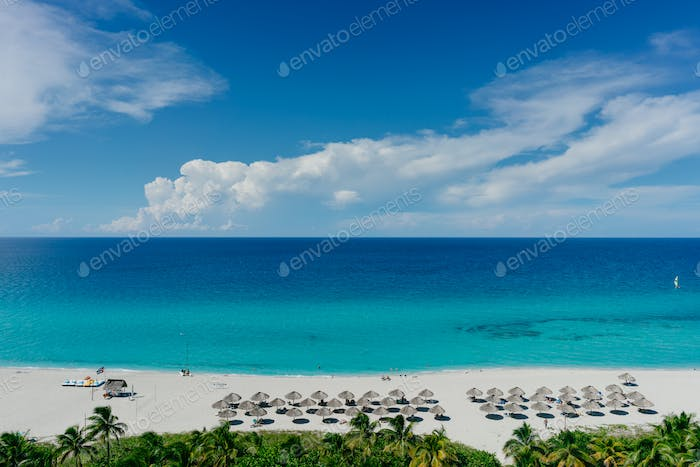 The most beautiful species in the Atlantic Ocean and beach in the resort of Varadero, Cuba