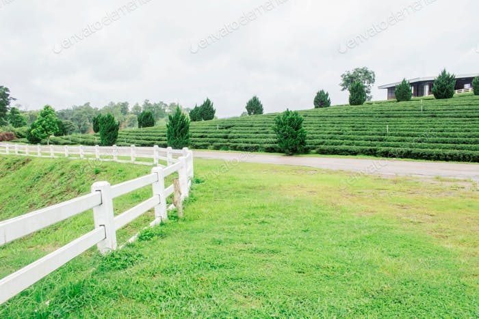 fence and lawn on tea farm