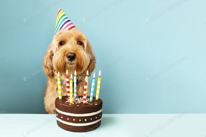 Lustiger Hund mit Geburtstagstorte