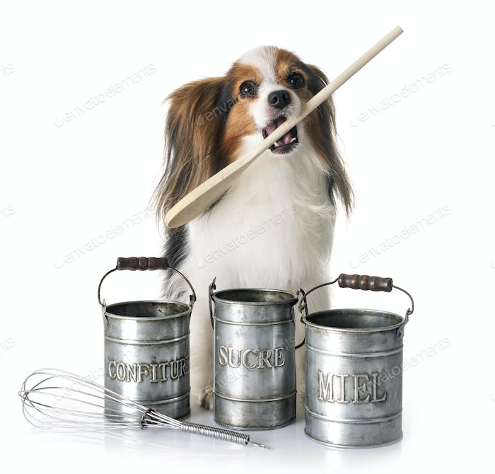papillon dog cooking