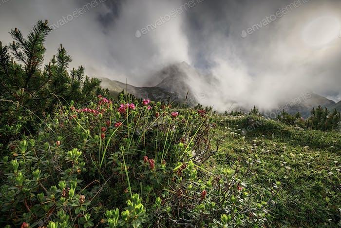 Rhododendron Blumen in nebligen Bergen