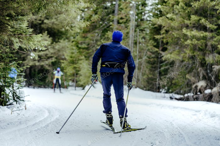 male skier in pine forest