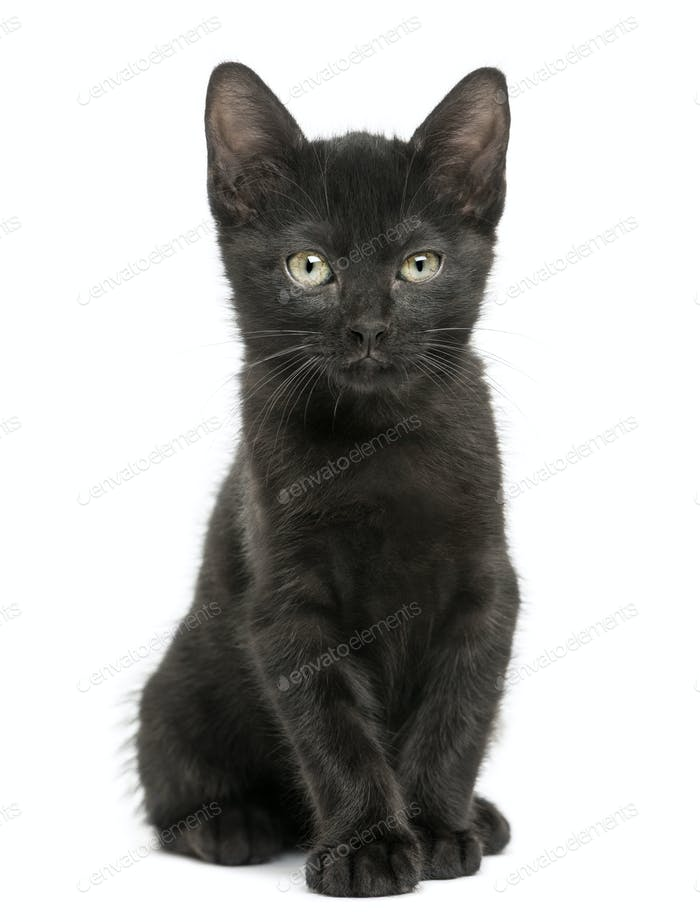 Black kitten sitting, looking at the camera, 2 months old, isolated on white