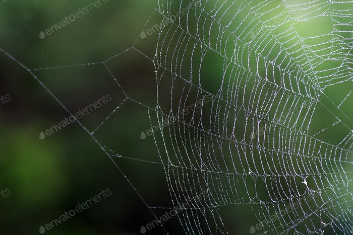 Thumbnail for Spider's web
