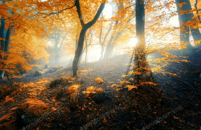 Magical old forest with sun rays in the morning