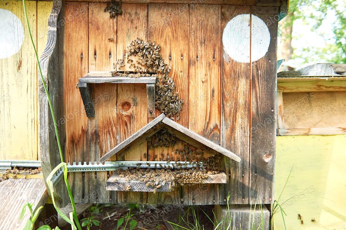 Beehives in an apiary outdoors