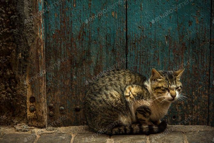 Cat resting beside old wooden door in Morocco