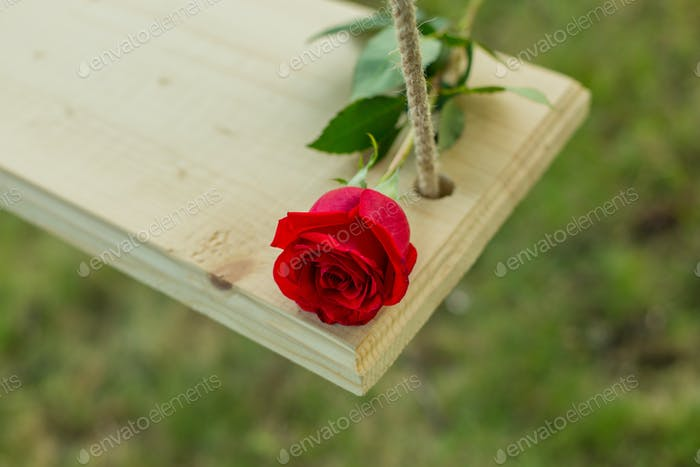 beautiful red rose on a swing