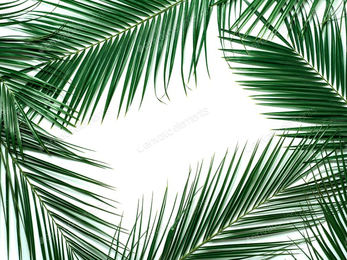 Tropical leaves isolated, copy space