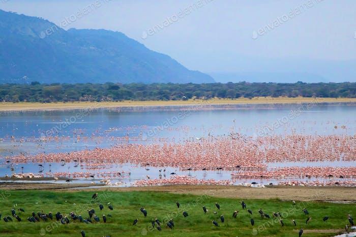 Lake-manyara-np-60