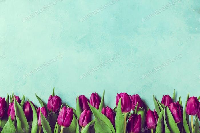 Purple tulips border