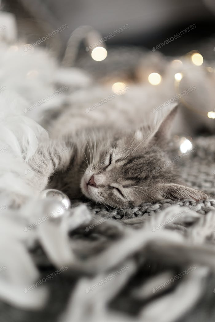 little gray kitten is sleeping on a soft gray knitted plaid. Cozy home background with funny pet.