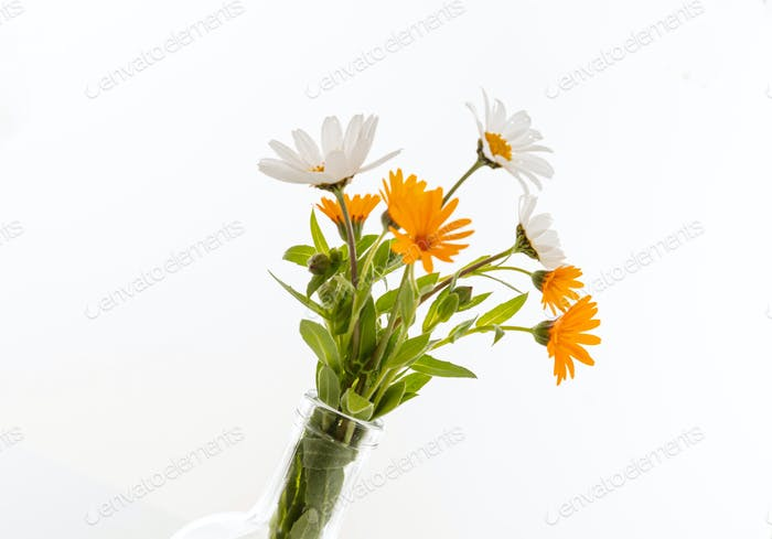 Wild flowers daisies and chamomile fresh bunch isolated against white background.