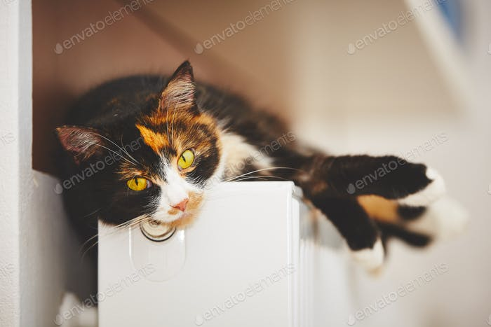 Cat on the radiator