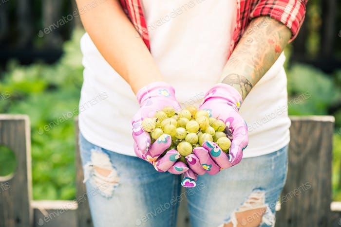 Woman gardener holding gooseberry in hands
