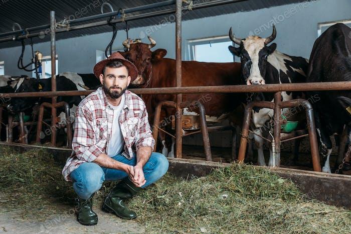 gutaussehender bärtiger Bauer Blick auf die Kamera, während er in der Nähe von Kühen in Stall hockt