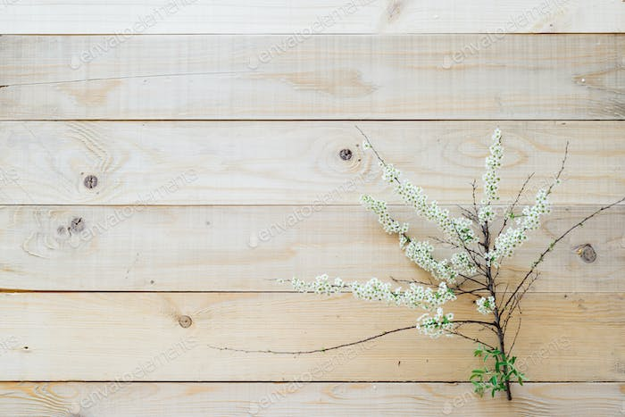 top view on wooden background blooming branch spirea