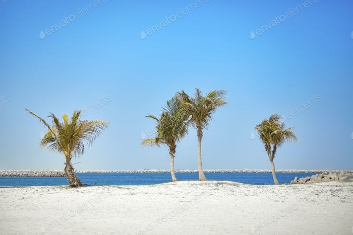 Beautiful beach with coconut palm trees.