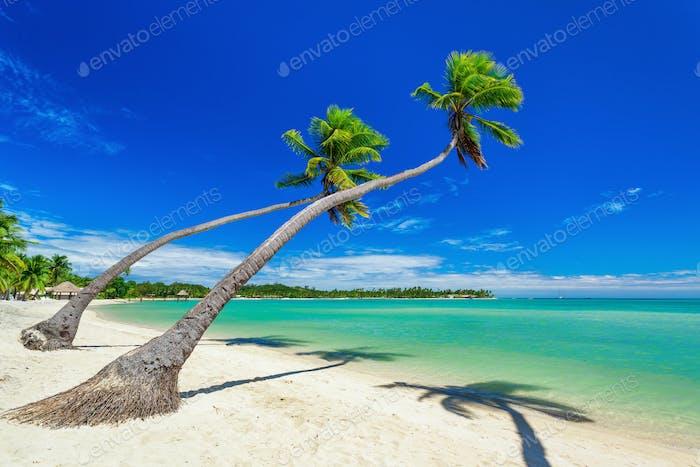 Couple of Palm trees over white beach on a a Plantation Island,