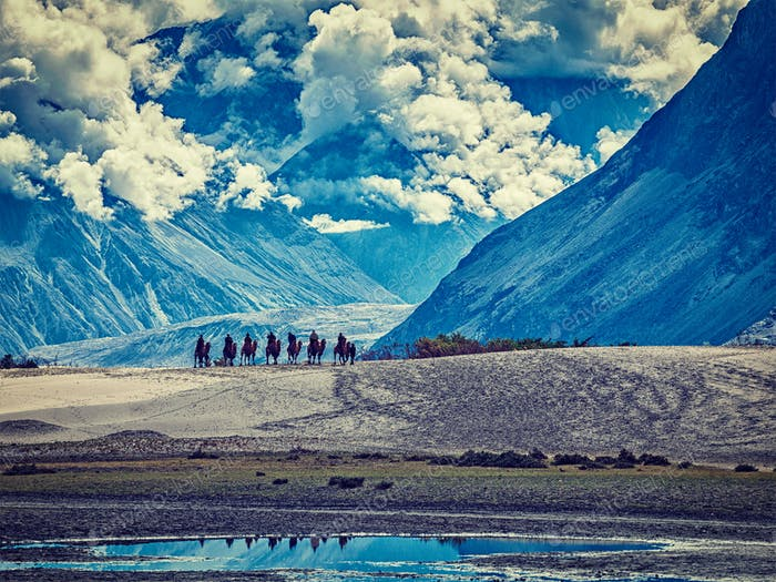 Tourists riding camels in Nubra valley in Himalayas, Ladakh