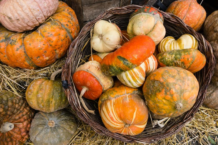 Variety of pumpkins