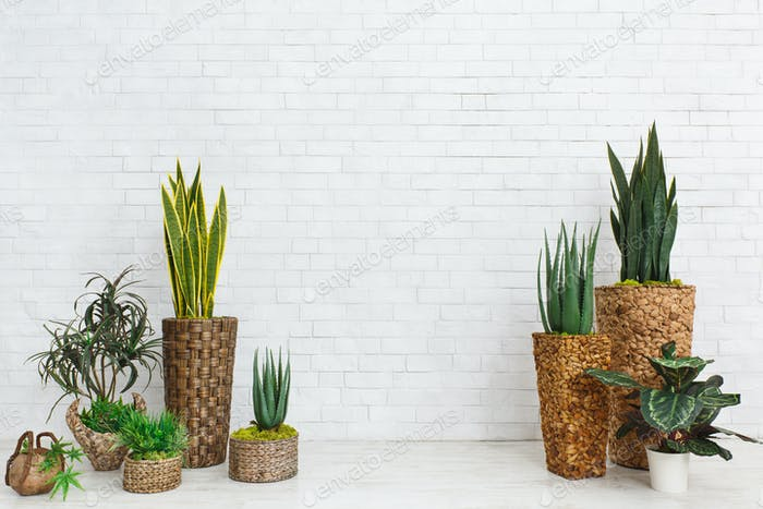 Succulents in DIY pots in scandinavian style home