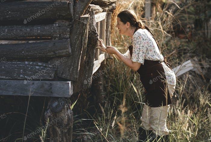 Bauer sammelt Eier aus dem Hühnerstall