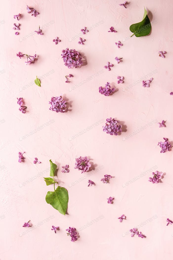 Lilac flowers over pink