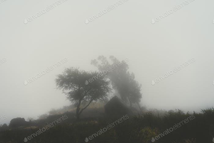 Silhoutte von Bäumen und ein Haus im milchigen Nebel