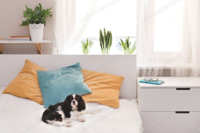 Dog in the bedroom