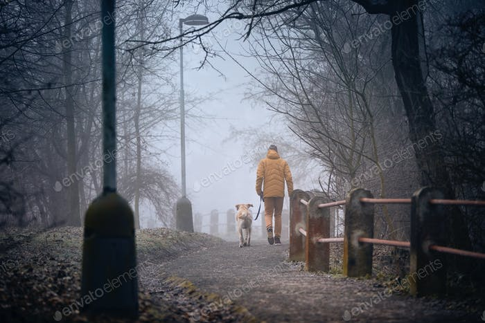 Morning walk with dog in fog