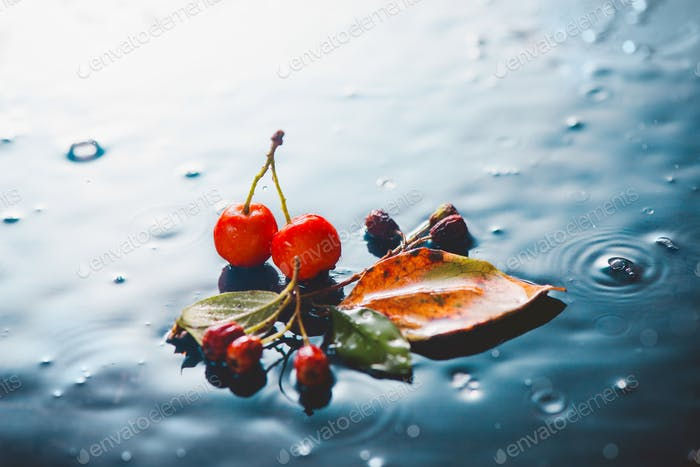 Rainy autumn still life with fallen eaves, red berries and water drops on a stone background
