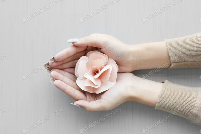 Hands Hold Cupping Paperwork Pink Rose on Gray Background