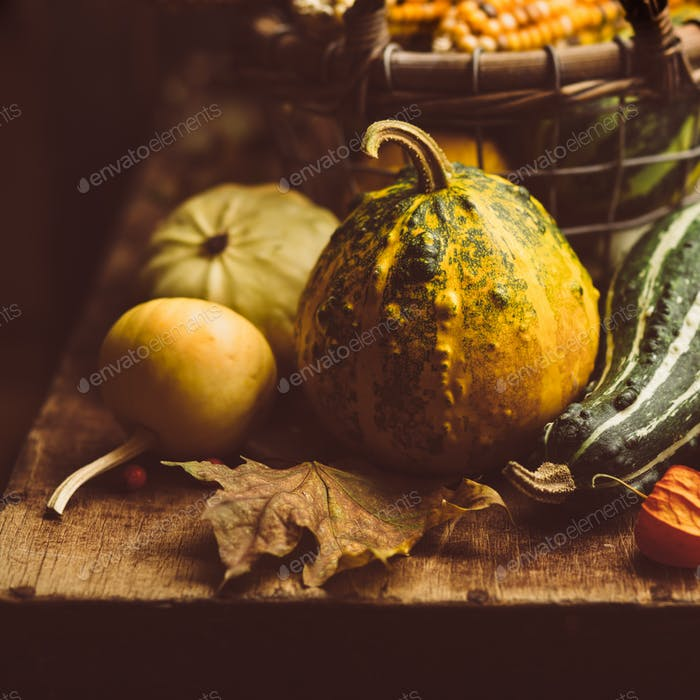 Small pumpkin closeup