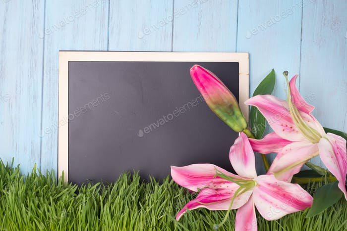 Lilies on a white background