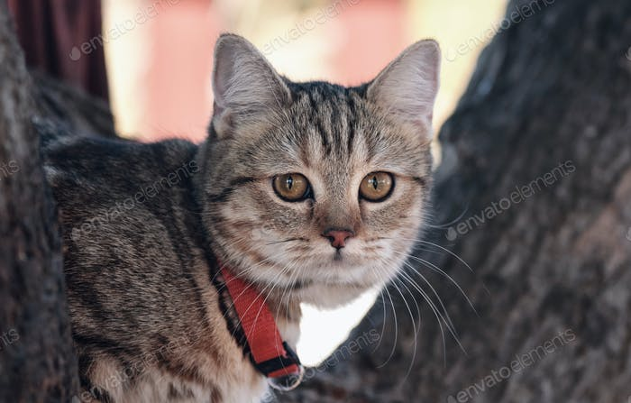 Snapshot of a tabby cat