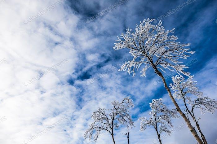 gefrorene bäume auf auf ein berg