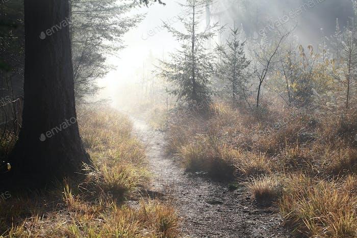 walk path in misty autumn forest