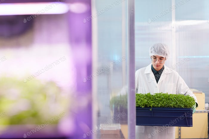 Farmer with seedlings
